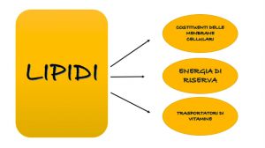 lipidi-macronutrienti