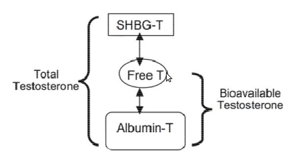 shbg-albumina
